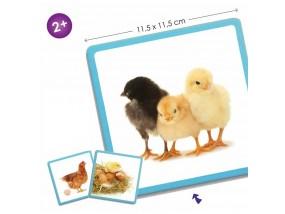 obrázek Maxi sekvenční karty - příroda